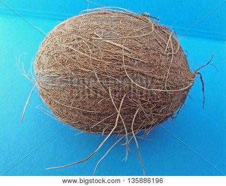 Coconut Fruit Over Light Blue Background