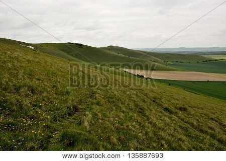 Pewsey Downs National Nature Reserve. British grassland on the Marlborough Downs overlooking the Vale of Pewsey, in Wiltshire, England
