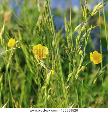 a yellow flower which enjoy the eyes of the beholder. yellow flowers represent jealousy