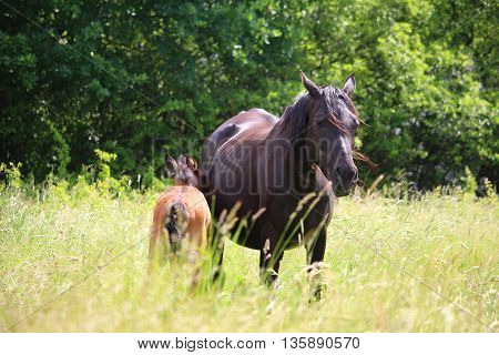 horse an exceptional animal. perhaps the most beautiful animal on earth in fascinating picture mother and baby
