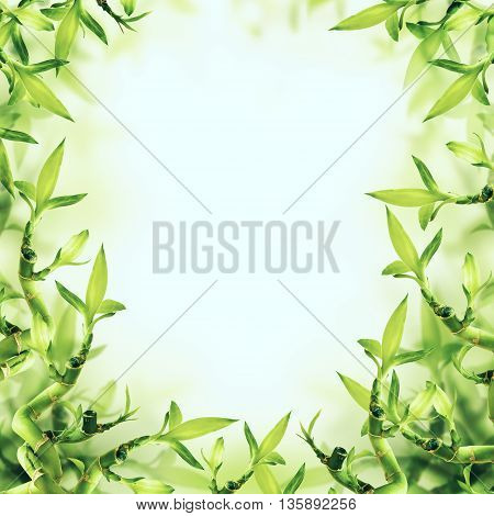 Green Bamboo Background and sunlight. Spa and Healthy