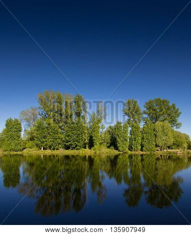 forest and reflection in water. summer landscape