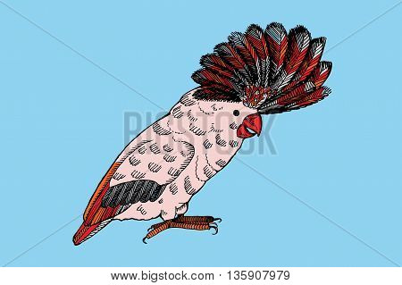 Parrot with pappus. Hand drawn vector stock illustration.