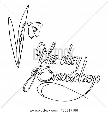 World snowdrop day. Hand drawn vector stock illustration. Black and white whiteboard drawing.
