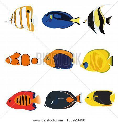 Tropical fishes set containing nine fishes: Copperband Angelfish Blue Tang Moonrish Idol Clownfish Flameback Angelfish Masked Angelfish Flame Angelfish Achilles Tang Rock Beauty Angelfish.