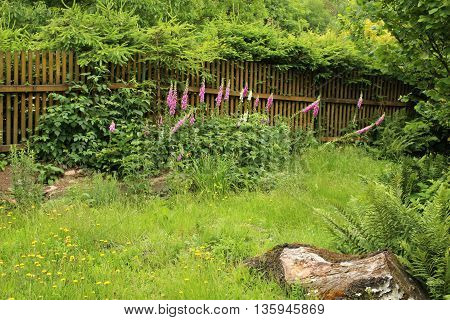 Overgrown  Garden packed with flowers, shrubs and trees