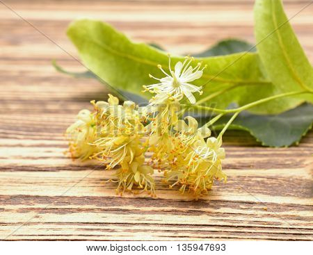 Linden (also known as lime and basswood) flowers on wooden background