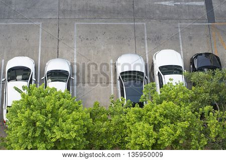 Top view of  Car park with green tree