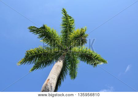 Palm tree seen from below looking up at the leaves