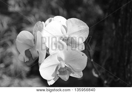 Wild orchid shown in black and white view
