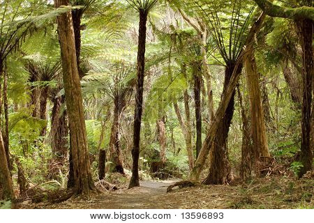 Jungle with giant ferns
