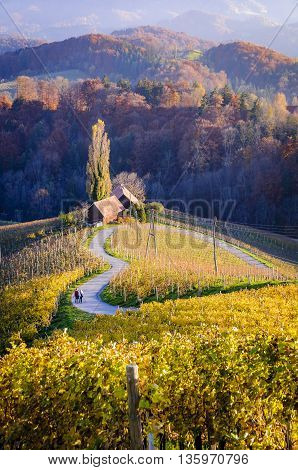 Heart of Slovenia a natural heart form shaped by a hill a heart appears in the midst of vineyards. A couple facing away from viewer is walking down the road holding hands