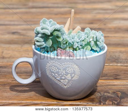 Potted Succulent In A Coffee Pot.
