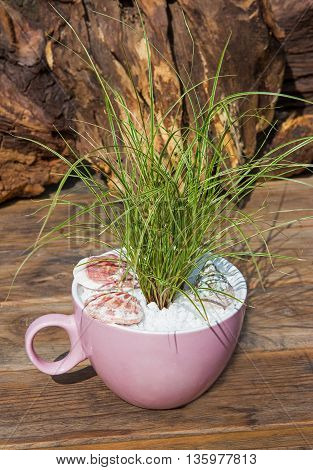 Potted Small And Decorative Grass.