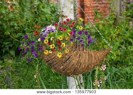 Hanging Basket With Plenty Of Petunia Blossoms.