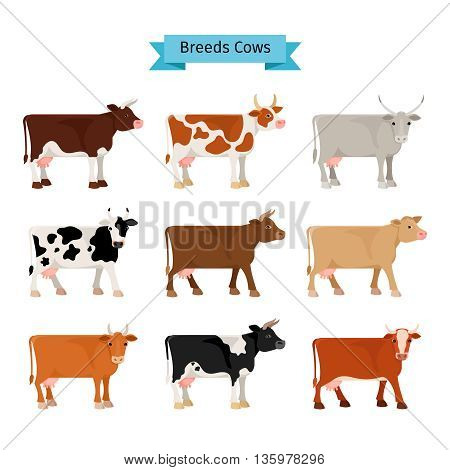 Cow flat icons. Vector cows of different colors