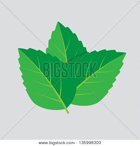 Mint vector leaves. Plant mint green leaf mint eps10