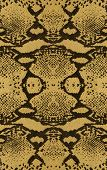 beautiful leather snakeskin for background or backdrop poster