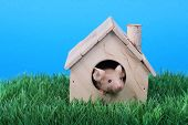 little fancy mouse in a little wooden house on green grass poster