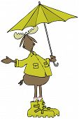 Illustration of a bull moose wearing rain gear and holding a matching umbrella while checking for precipitation.. poster