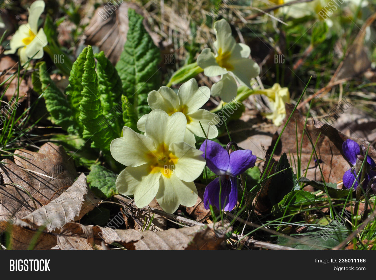 Early Spring Flowers Image Photo Free Trial Bigstock