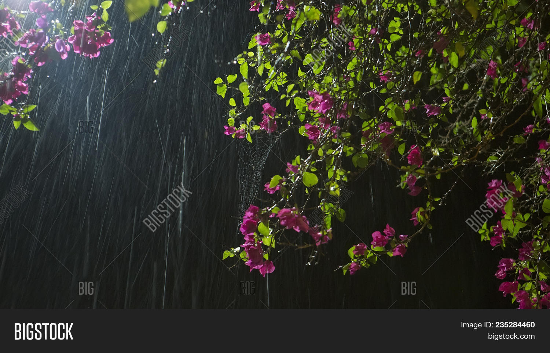 Flower rain beautiful image photo free trial bigstock flower in rain beautiful purple garden flowers in rain at the black night background izmirmasajfo