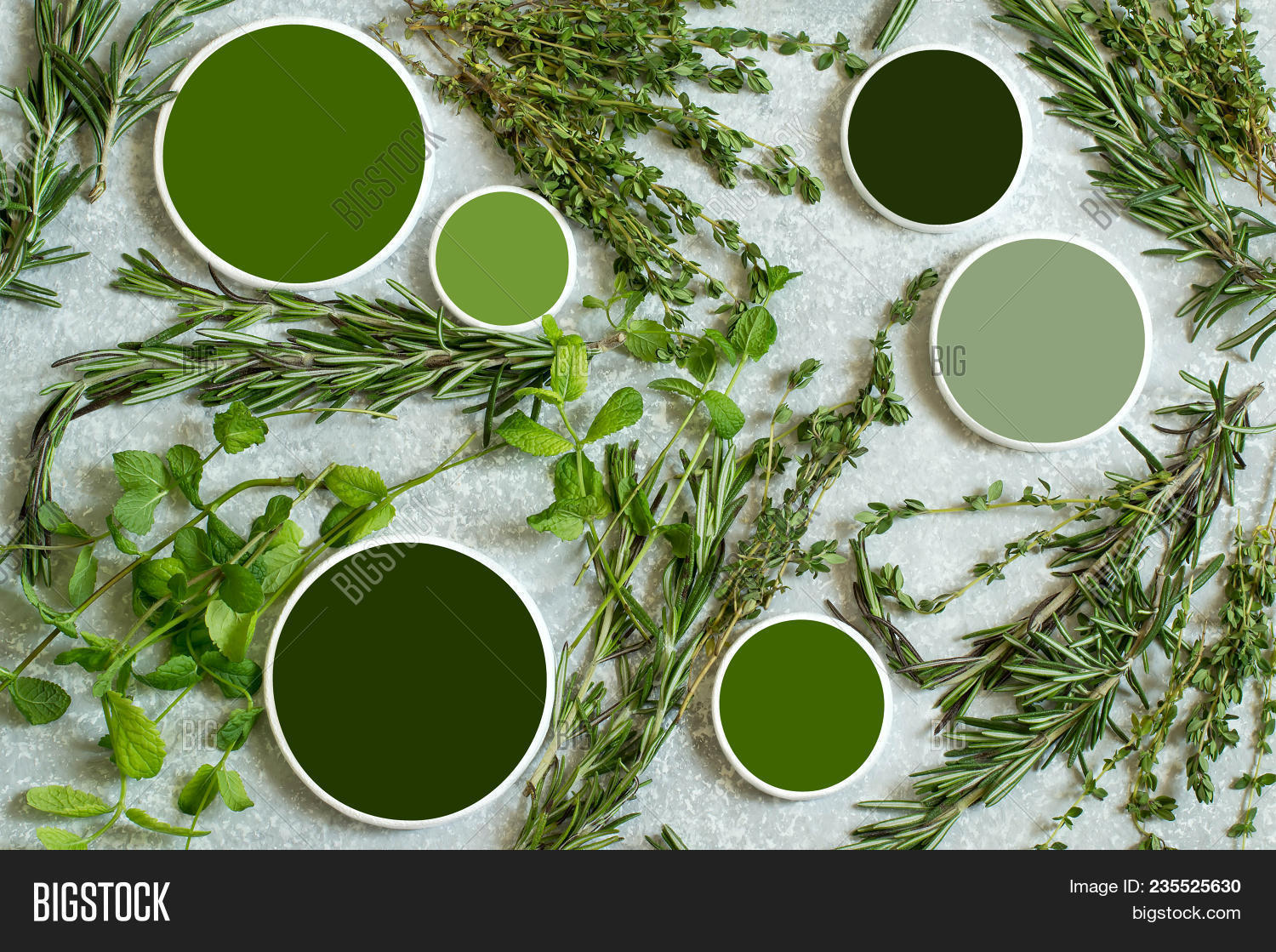 Aromatic Herbs Image & Photo (Free Trial) | Bigstock
