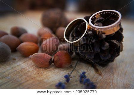 Wedding Rings On A Fir Cone Jn A Tree