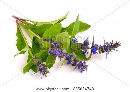Ajuga Genevensis (also Variously Known As The Upright Bugle, Blue Bugle, Geneva Bugleweed, Blue Bugl