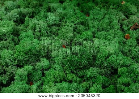 Nature Moss And Lichen Backgrounds. Green Moss Lichen Texture. Natural Mountain Green Moss Closeup B