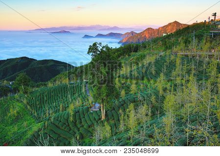 Sunset Landscape With Mountains And Sky Clouds,beautiful Sunset Scenery With Ginkgo Trees,tea Planta