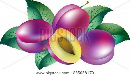 Plums And Leaves Illustration. Ripe Plums And Half Of Plum.