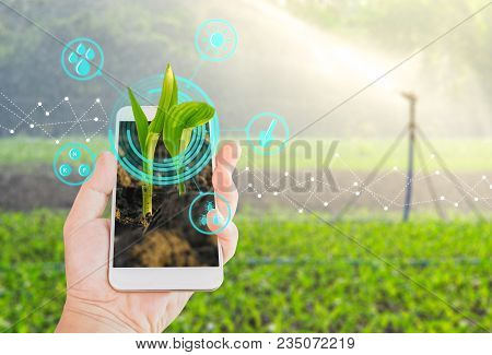 Growing Young Maize Seedling In A Mobile Smartphone On Hand With Modern Agriculture Digital Technolo