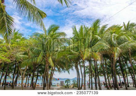Many Beautiful High Palm Trees Grow Near, Aleya Palms, Tropical Island And Beautiful Trees Grow To T