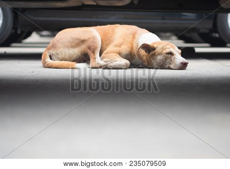 Stray Brown Dogs Are Sleeping On Concrete Floors In Outdoor Car Park Area, Selective Focus.