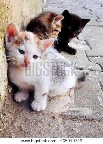 Three Homeless Kittens On Street. Three Little Tabby And Spotted Kittens Lying Outdoor. White Three