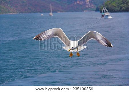 Photo Taken In Croatia. The Gull Flies Over The Sea And Hunts For Fish