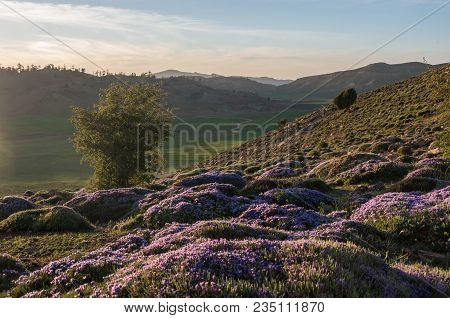 Flowers,  Moss And Grass In The Sunlight. Highland Valley In Middle Atlas Mountain Range, Morocco, A