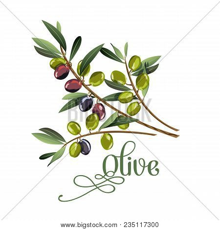 Vector Realistic Illustration Of Black And Green Olives Branch Isolated On White Background. Design