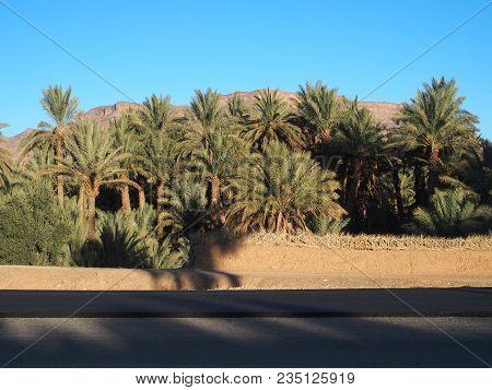 Asphalt Road, Landscapes Of Green Palm Trees Oasis In Central Morocco In Old Oulad Village Near Zago