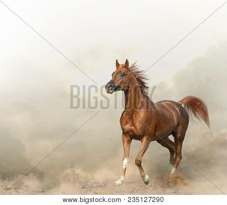 Graceful Chestnut Arabian Stallion Running In Prairies
