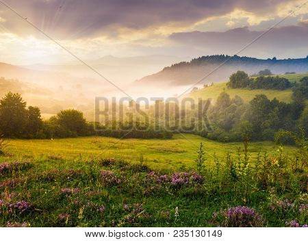 Gorgeous Foggy Sunrise In Carpathian Mountains. Lovely Summer Landscape Of Volovets District. Purple
