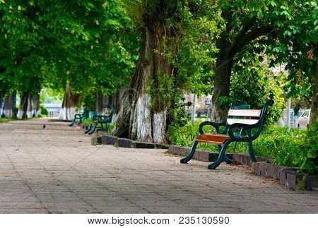 Bench In The Shade Of Chestnut Alley. Lovely Urban Scenery In Summer