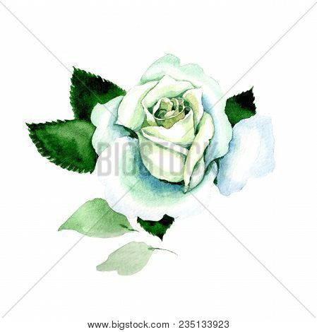 Whit Roses. Floral Botanical Flower. Wild Spring Leaf Wildflower Isolated. Aquarelle Wildflower For