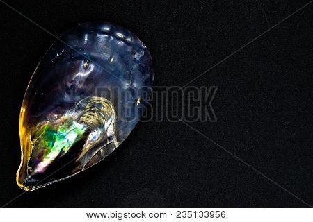 Various Colors Black Seashell On Black And Shiny Background Surface With Free Space. Colors Variatio