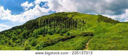 Narrow Path To The Mountain Top. Beautiful Panorama Of Summer Landscape With Grassy Hills With Fores