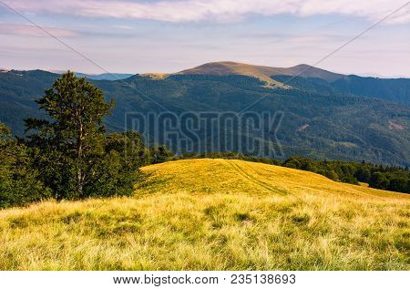 Beech Tree On Grassy Hillside In Evening. Beautiful Landscape Of Svydovets Ridge In Summertime