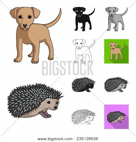 Realistic Animals Cartoon, Black, Flat, Monochrome, Outline Icons In Set Collection For Design. Wild