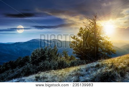 Time Change Concept  Tree On The Grassy Hillside. Lovely Summer Landscape Of Carpathian Mountain Svy