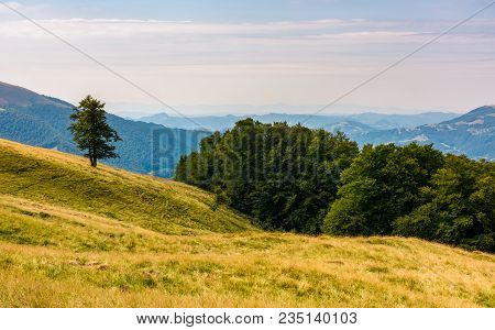 Forested Hills Of Carpathian Mountains. Beautiful Summer Landscape. Beech Trees On A Grassy Hillside